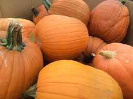 Pumpkin Patches Near Broomfield by Wardle Feed U0026 Pet Supply Page 4 Of 5 Visit Us At Facebook Com