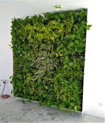30 die grüne wand ideen wandgarten grüne wand wand