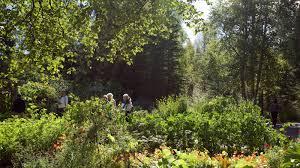 Nature View of Alaska Botanical Garden