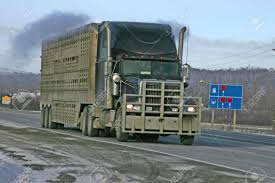 100 Cattle Truck Stock Photo Picture And Royalty Free Image Image 740808