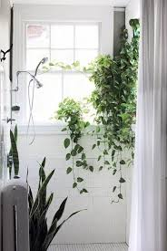 Plants For The Bathroom Feng Shui by Best 25 Bathroom Plants Ideas On Pinterest Best Bathroom Plants