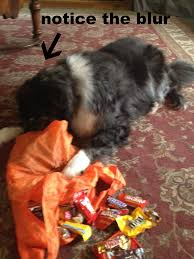 Halloween Candy Tampering 2014 by How To Protect Your Candy An After Halloween Special Edition