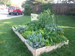 Fall Gardening Urban Farm Colorado