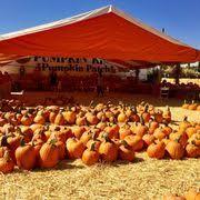 Pumpkin Patches Near Bakersfield Ca by Pumpkin King Pumpkin Patch 59 Photos U0026 18 Reviews Festivals