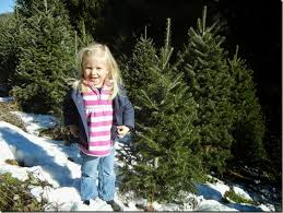 Cartner Christmas Tree Farm by Alanna Wendt To Tennessee