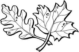 Click To See Printable Version Of Oak And Maple Leaves Coloring Page