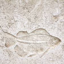 Shell Stone Tile Manufacturers by Fossils Matrix Z