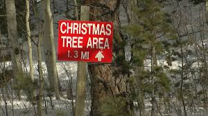 Christmas Tree Permits Colorado Springs by Everything You Need To Know About Cutting Your Own Christmas Tree