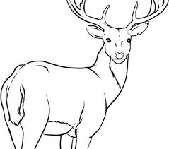 Colouring Pages Coloring Deer At Collection Free Kids Another Portion Of 10 Image Gallery