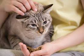 cat wont eat a cat s boycott at mealtime might signal dental problems catster