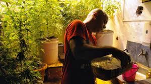 uruguay legalisiert anbau und verkauf cannabis