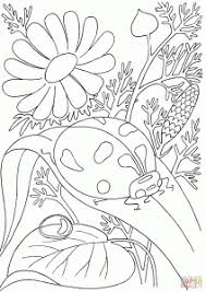 Ladybird Among Flowers Coloring Page Cartoon
