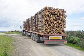 Trucks With Load Of Tree Trunks Of Eucalyptus Stock Photo, Picture ... Orange Tree Wooden First Trucks Pack Of 3 At John Lewis Partners Stock Photos Images Alamy Convoy Utility And Removal On The Way North I95 Davey Removal October 13th 2013 Toronto On Youtube Pine Tree Logs Being Moved By Logging Trucks Photo 123598464 Wright Service Reaps Rewards From Long Forestry Bucket Affordable How To Ensure Efficient Vocational Truck Specifications Equipment For Sale A Better Arborist American Historical Society