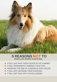 Do All Dogs Shed Fur by Double Coats Shedding U2013 Fur Ever Loved Pet Salon