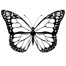 Butterfly Printable Coloring Pages Life Cycle Page Pdf Colouring For Toddlers Sheets Large Size