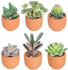 hawesome künstliche sukkulenten 6pcs klein topfpflanzen sukkulenten in tontöpfe tischdeko dekoration fensterbank haus garten schreibtisch wohnzimmer