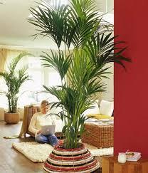 die schönsten palmenarten living at home