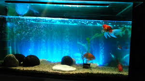 Fish Tank LED Light Bar 62cm 6 5w 24 LED Bubble Aquarium Light 120 ... I Really Want A Jellyfish Aquarium Home Pinterest Awesome Fish Tank Idea Cool Ideas 6741 The Top 10 Hotel Aquariums Photos Huffpost Diy Barconsole Table Mac Marlborough Tank Stand Alex Gives Up Amusing Experiments 18 Best Fish Images On Aquarium Ideas Diy Clear For Life Hexagon Hayneedle Bar Custom Tanks Ponds Designs For Freshwater Modern 364 And Tropical Ov Cylinder 2