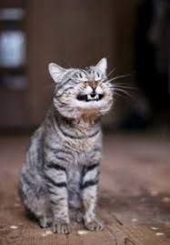 cat dental care cat teeth 10 tips for cat dental care ourfriends4ever