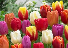plant flower bulbs now before the garden club