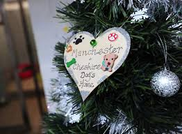 Are Christmas Trees Poisonous To Dogs Uk by This Is What Manchester Dogs U0027 Home Gets Up To On Christmas Day