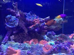Decorator Crab Tank Mates by Atlas Aquarium Marine Home