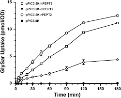 Species Differences in Human and Rodent PEPT2 Mediated Transport of