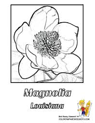 Enter For American States HI LA Flower Coloring Pics 03 At YesColoring
