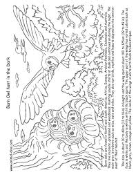 Animal Coloring Page Barn Owl Print Size