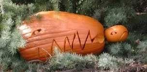 T Rex Dinosaur Pumpkin Stencil by More Carving Ideas 2009 Nipomo Pumpkin Patch