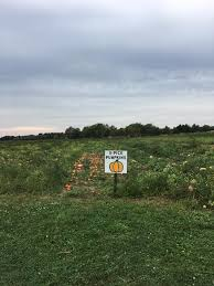 Pumpkin Picking Riverhead by Autumn Daytrips Best Long Island Places To Pick Apples And