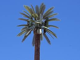 Phone Tower disguised as Palm Tree