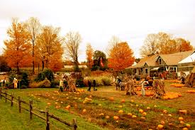 Pumpkin Picking Long Island Ny by Pumpkin Farm Pic Photos And Phone Books