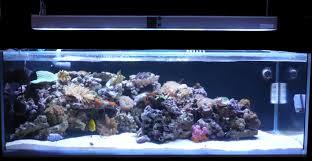 eclairage led pour aquarium eau de mer lumirium eclairage led pour aquarium