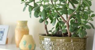 Plants In Bathroom According To Vastu by Feng Shui Says This Plant At Right Place Is Key To Brings Good