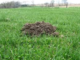 Elegant How To Get Rid Of Flies In Your Backyard | Architecture-Nice How To Get Rid Of Moles Organic Gardening Blog Cat Captures Mole In My Neighbors Backyard Youtube Animal Wikipedia Identify And In The Garden Or Yard Daily Home Renovation Tips Vs The Part 1 Damaging Our Lawn When Are Most Active Dec 2017 Uerstanding Their Behavior Mole Gassing Pests Get Correct Remedy Liftyles Sonic Molechaser Alinum Covers 11250 Sq Ft Model 7900