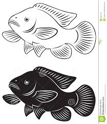 Tilapia Fish Stock Illustrations 112 Vectors Clipart