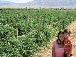 Basses Pumpkin Farm Groupon by Vegas Family Guide