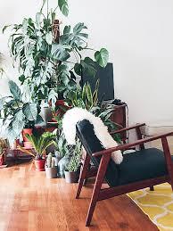 kann eine zimmerpflanze wirklich für besseren schlaf sorgen