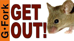 How To Get Rid Of Mice & Mouse Proof Your House - GardenFork - YouTube Mice How To Identity And Get Rid Of In The Garden Home Rats Guaranteed 4 Easy Steps Youtube Does Peppermint Oil Repel Yes Best 25 Getting Rid Rats Ideas On Pinterest 8 Questions Answers About Deer Hantavirus Mouse Control To Of In The Keep Away From Bird Feeders Walls 2 Quick Ways That Work Get Rid Of Rats Using This 3 Home Methods Naturally Dangers Rat Poison Dr Axe Out Your Without Killing Them