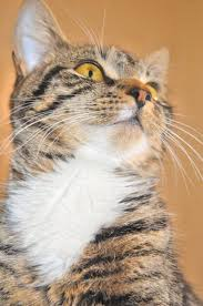 my cat has dandruff how to get rid of cat dandruff pets