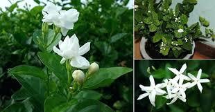 plante dans chambre à coucher plantes depolluantes chambre a coucher plante depolluante pour