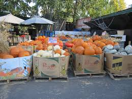 Clayton Valley Pumpkin Farm by Halloween Pumpkin Patch And Petting Zoo Windmill Farms Produce