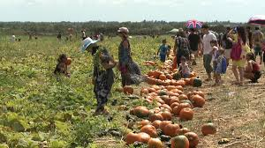 Pumpkin Patch College Station by Aloun Farms U0027 Pumpkin Picking Patch Opens This Weekend Khon2