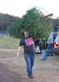 Christmas Tree Baler Netting by Cutting Your Own Christmas Tree This Season What You Need To Know