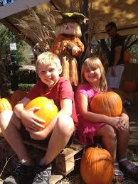 Pumpkin Patch Orlando Area by Guide To Pumpkin Patches In Tampa Bay