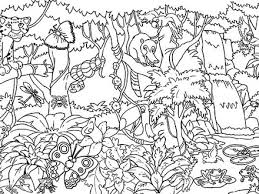 Rainforest Coloring Pages Endangered Species