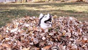 Sky (Dog - Siberian Husky) In The Leaves Of Our Yard In Fall - YouTube How To Install Invisible Dog Fence Wire Youtube To Bury A Pet In 6 Simple Steps Digging Create A Sandbox Just For His Digging I Like The Build Sandbox And They Will Come Thepetdoctormbcom New Ny Law Allows People Be Buried With Pets Peoplecom Burial Funerals Malaysia Transparent Pricing Your Trusted Puppy Loves Be Buried In Sand When Pet Is Dying Owners Face Options Deputies Dig Grave Help Woman Dead Dog Two Boys Backyard Burying Bird Stock Photo Getty Images Yard That Himself Alive While Chasing Skunk Line