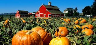 Pumpkin Patches Near Dallas Tx 2015 by Texas U0027s Top Pumpkin Patches Textraveler Com