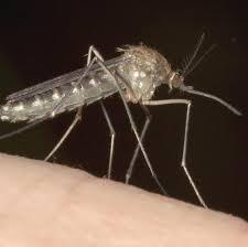fünf tipps so vertreiben und bekämpfen sie mücken